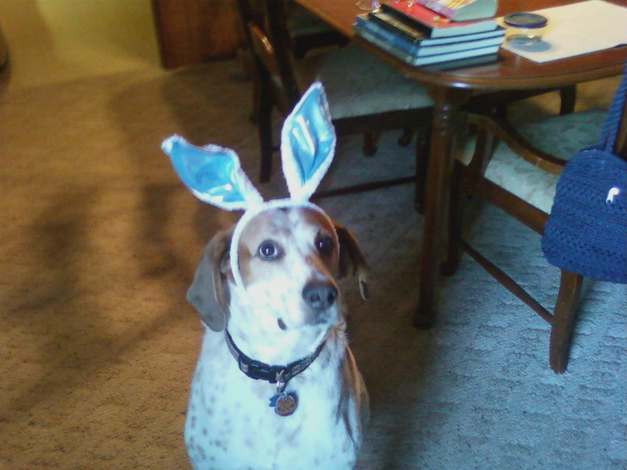 Marvin_Easter_Bunny