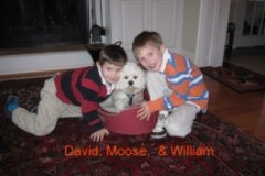 Moose_family_1