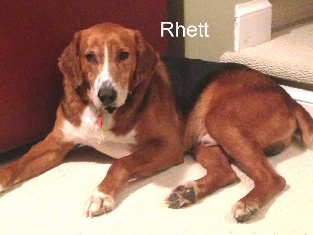 Rhett