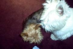 Molly & Hamish