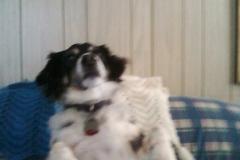 Murphy on sofa